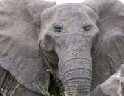Умора: если бы у животных глаза были спереди