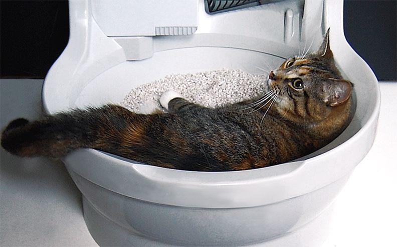 Что требует меньше уборки: крытые туалеты или открытые лотки