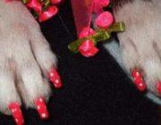 Когда хозяин – идиот: фотки собак, которым накрасили ногти